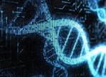 Генетическое исследование при неразвивающейся беременности